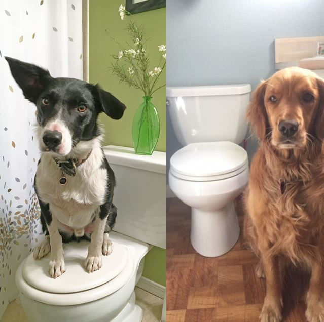 Dogs and toilets