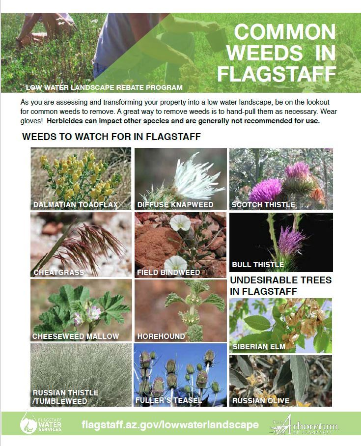 LowWaterLandscapeInfo_PDF_Common Weeds