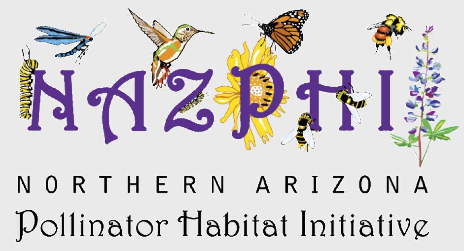 NAZPHI LOGO Opens in new window
